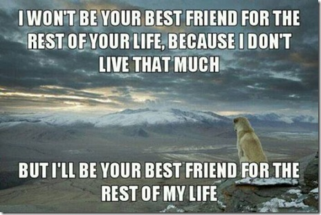dogs-love-friend-009