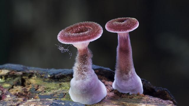 foto jamur
