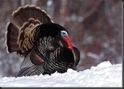 FT-Thanksgiving snow.jpg.CROP.promo-mediumlarge