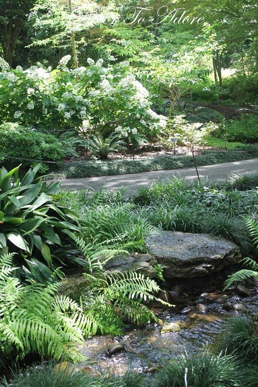 Dallas Arboretum 106