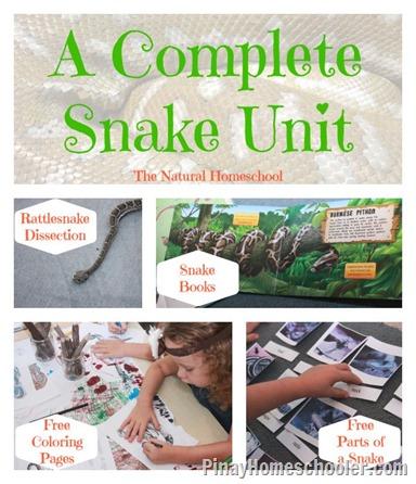 snake-main