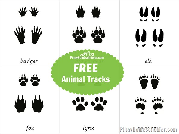 FREEAnimalTracks