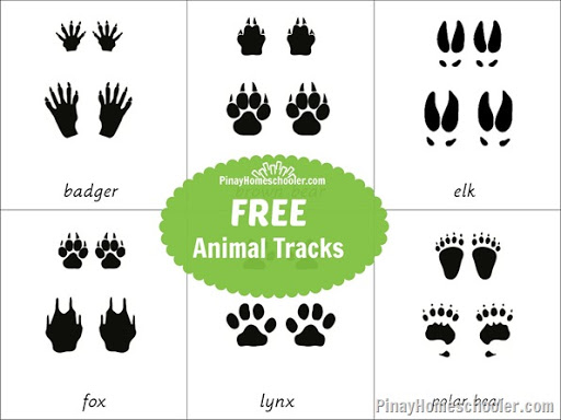 North American Animal Tracks | Worksheet | Education.com
