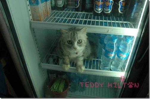 gatos sitios para esconderse (27)