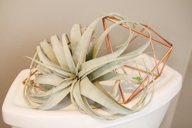 Bathroom Refresh Airplant