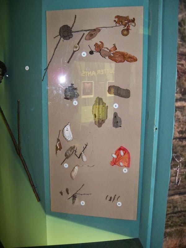Houston Museum of Natural Science - 116_2854.JPG
