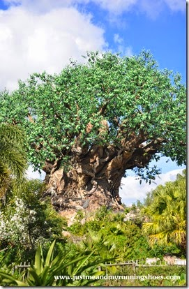 Animal Kingdom (7)