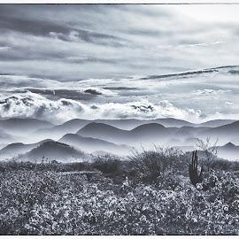 by Al Duke - Black & White Landscapes ( haiti,  )