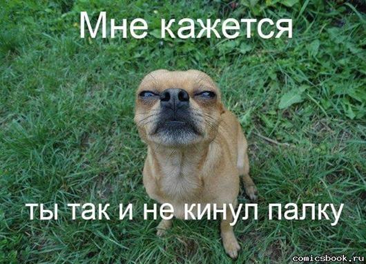 Прикол-Собака-подозревака-103590