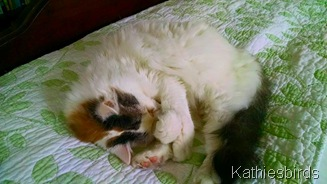 17. 7-4-15 kitty bliss
