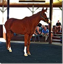 KY horse park 069