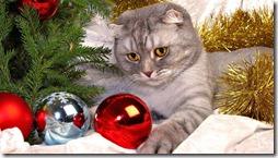 77- gatos navidad (8)- buscoimagenes
