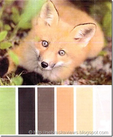 Fox color pallet095