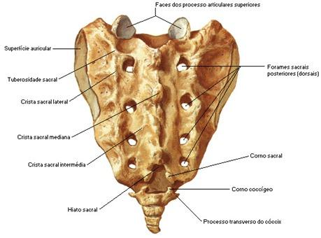 sacroposterior