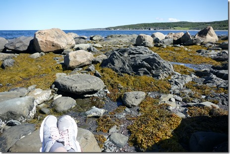 nl_boone_bay_lobster_cove5