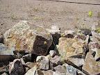 Unidentified, in rock wall 4/25