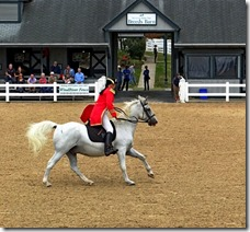 KY horse park 110