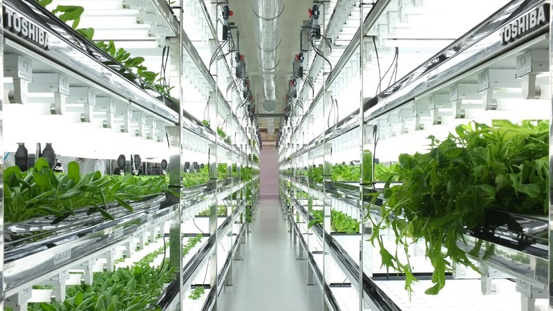 toshiba-indoor-farm-1