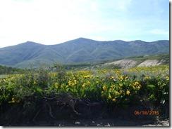 20 Jarbidge Mtn Flowers