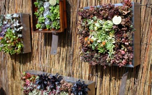 Cách làm chậu trồng cây treo tường - 197550