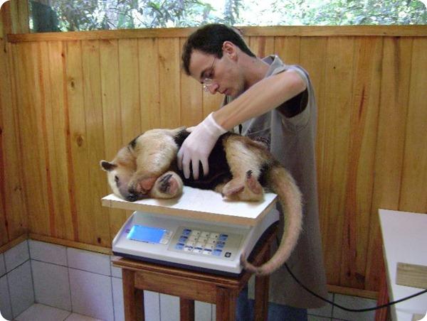 guira-oga-veterinaria