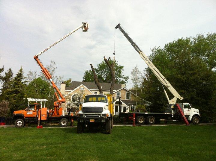 3 trucks 2 with cranes