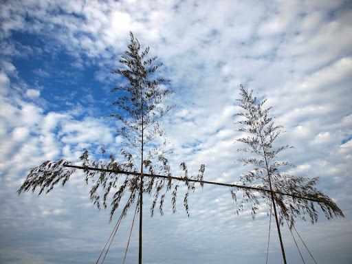 [写真]海への「門」となる即席の鳥居