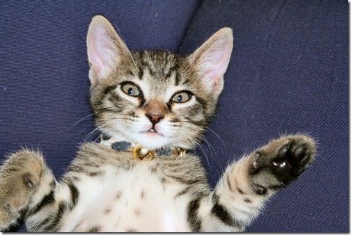 1123cute-cats-wallpapers-background-143