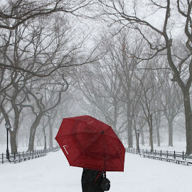 Poets Walk by Victor Mirontschuk - City,  Street & Park  City Parks ( winter, park, snow, nyc, blizzard,  )