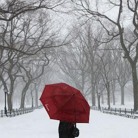 Poets Walk by VAM Photography - City,  Street & Park  City Parks ( winter, park, snow, nyc, blizzard,  )