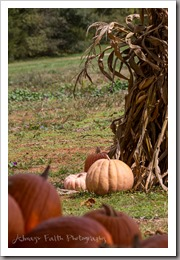 October 16, 2015 - Devine Farms in Newton hosts school field trips and events at their Pumpkin Patch and Corn Maze throughout the fall season. Photo by Faith Davis