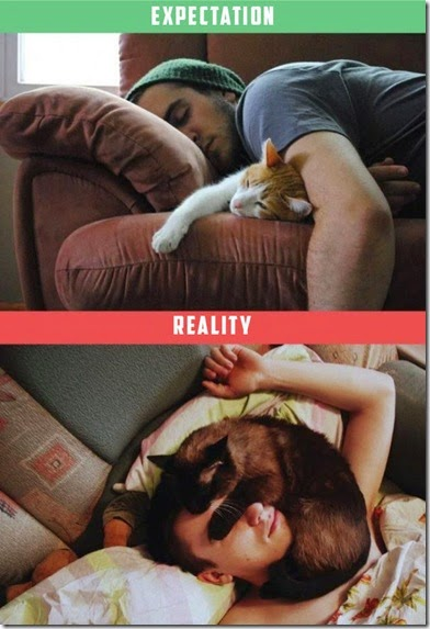 cats-expectations-reality-003