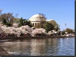 櫻花.....