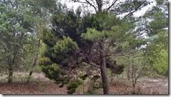 Strange tree growth