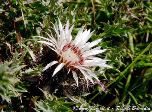 51_carlina segnatempo_Cainallo-Bietti-000 (FILEminimizer)