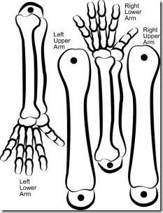 esqueleto para armar buscoimagenes com (3)