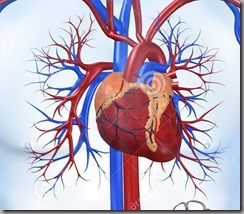 sistema-cardiovascular-5970091