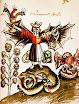 Arthur Edward Waite - The Pictorial Symbols Of Alchemy