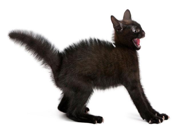 [gato-com-medo%255B1%255D.jpg]