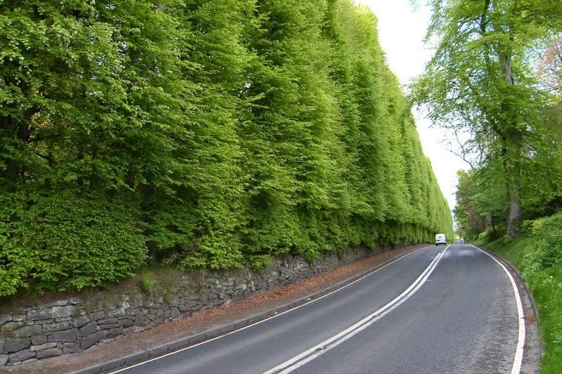 Meikleour Beech Hedges: World's Largest Hedge Meikleour-beech-hedges-1_thumb%25255B2%25255D