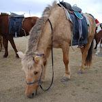 Konie osiodłane, za chwilę wyruszamy
