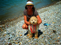 Gorgeousdoodles family love dog in MI.