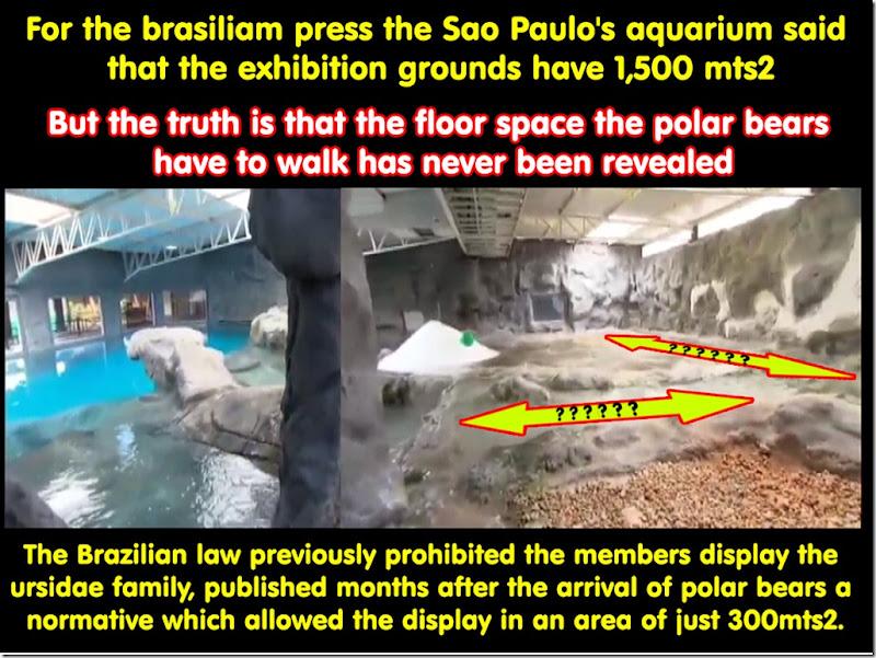 space-polarbear
