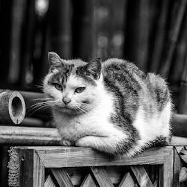 by Waldemar Dorhoi - Black & White Animals