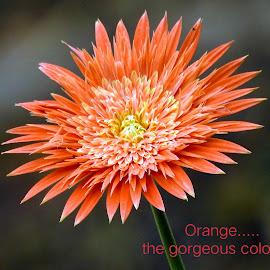 Orange....  by Asif Bora - Typography Quotes & Sentences