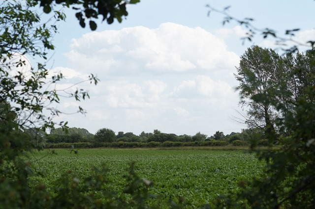 Norfolk countryside in summer