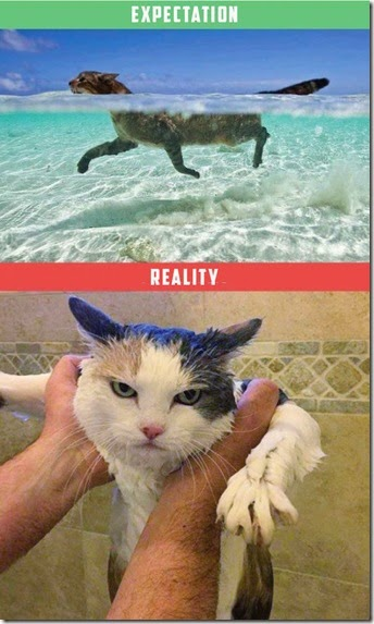 cats-expectations-reality-010
