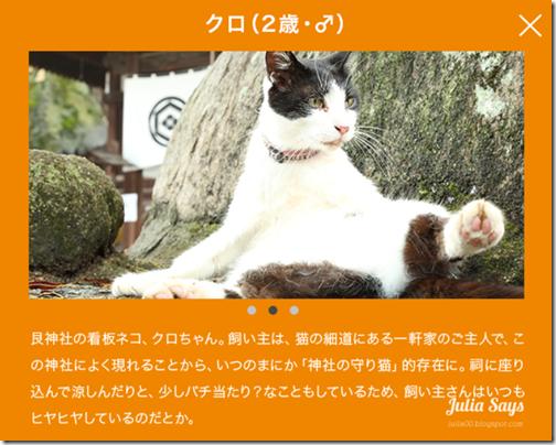 catstreetview (8)