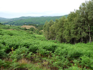 Looking back where I had come through!! Lots of bracken ... very difficult walking!