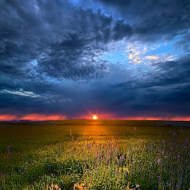 Revelations by Phil Koch - Landscapes Sunsets & Sunrises ( wisconsin, ray, phil koch, landscape, spring, sun, sky, nature, tree, perspective, horizons, light, clouds, orange, park, art, twilight, horizon, shadows, field, amber, sunset, meadow, trees, lines, beam, sunrise, earth, garden )